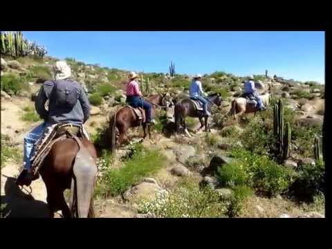 Peruvian Paso Horseback  Tours