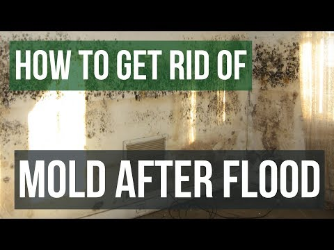 How to Get Rid Of and Prevent Mold After Flooding