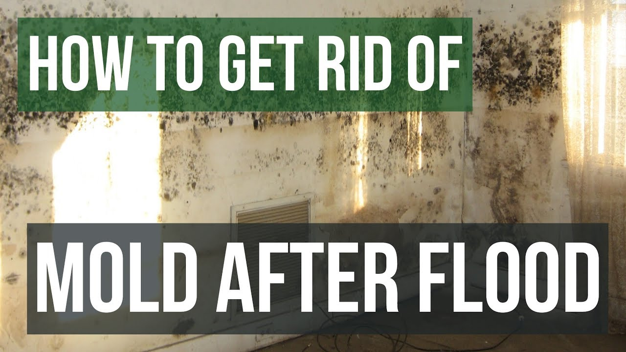 how to get rid of mold after flooding guaranteed 4 easy steps youtube. Black Bedroom Furniture Sets. Home Design Ideas