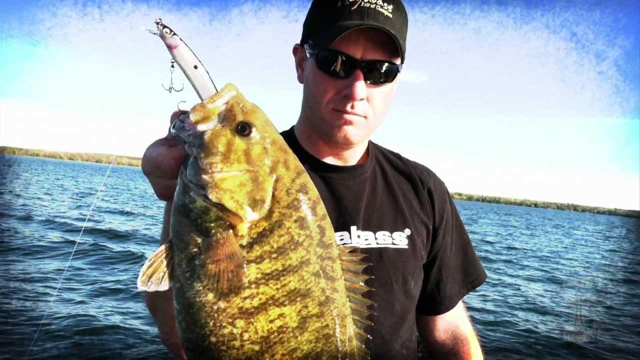 giant smallmouth bass on jerkbaits!!! - youtube, Hard Baits