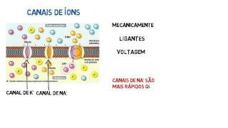 BioInfo - Sinapse - Potencial de Ação