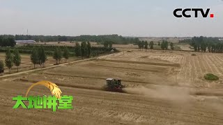 《大地讲堂》 20200329 2020年中央一号文件之稳产保供|CCTV农业