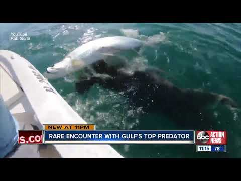 Mikey - VIDEO: Hammerhead Shark Yanks Fish Out of Man's Hands