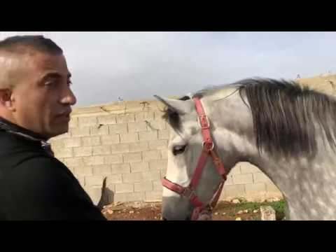 صيد اول افعى سنة 2019 مع جمال العمواسي