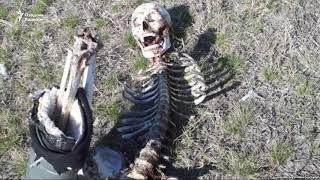 Оренбургда одам скелети ва унинг ёнидан ўзбек ватандошининг паспорти топилди