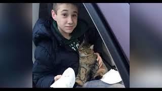 Мальчик спас кота, которого выбросили из окна движущегося автомобиля.
