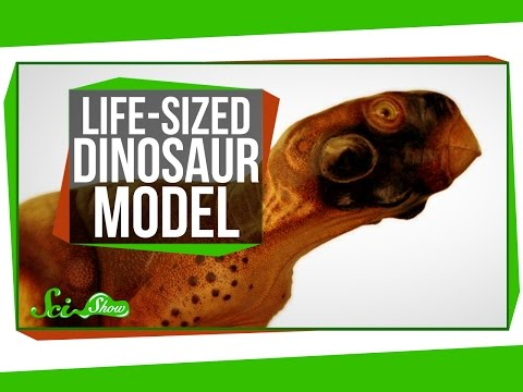 A Scientifically Accurate, Life-Sized Dinosaur Model
