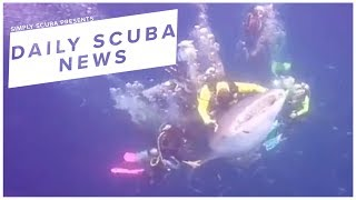 Daily Scuba News - Scuba Divers Have Been Arrested For Riding A Whale Shark