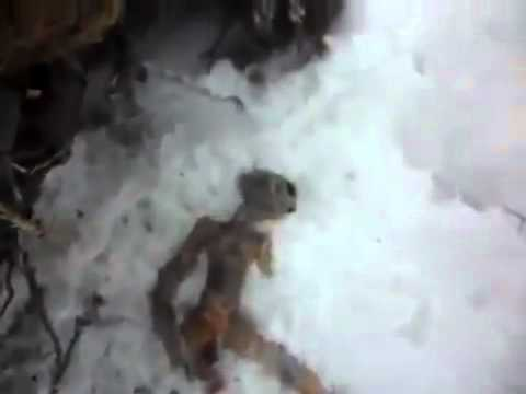 Dead alien found in UFO hotspot in Russia ; With translation - 2011