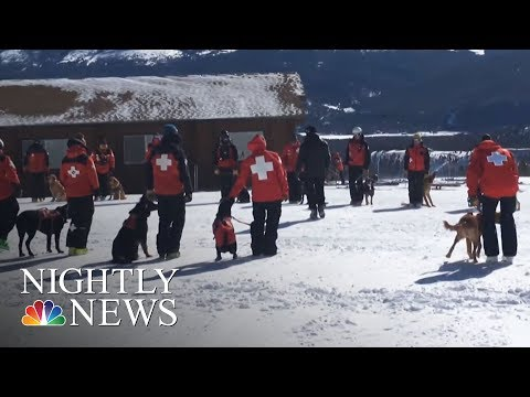 Rescue Dogs Become Avalanche Rescuers At Colorado Ski Resort   NBC Nightly News