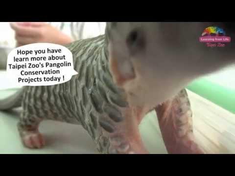 Pangolin Conservation Projects at Taipei Zoo–2015 World Pangolin's Day (English Version)