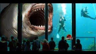 Megalodon GIANT SHARK ● 60 ft.