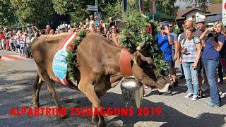 ALPABTRIEB TSCHAGGUNS 2019 #montafon #vorarlberg