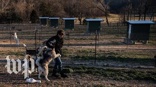 A look inside one dog breeder's business in the Ozarks