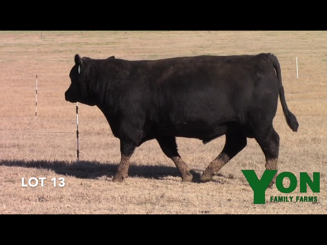 Yon Family Farms Lot 13
