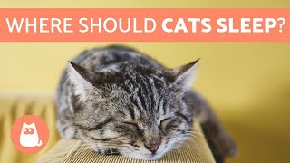 Where Should My CAT SLEEP? 🐱💤 Find Out!