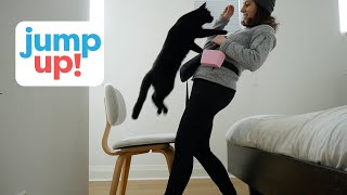 Teach Your Cat To Jump Into Your Arms