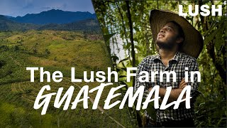 Lush Cosmetics: Investing in Regenerative Farming