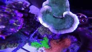 Ocean Corals Display 1 year on   HD 1080p For Youtube