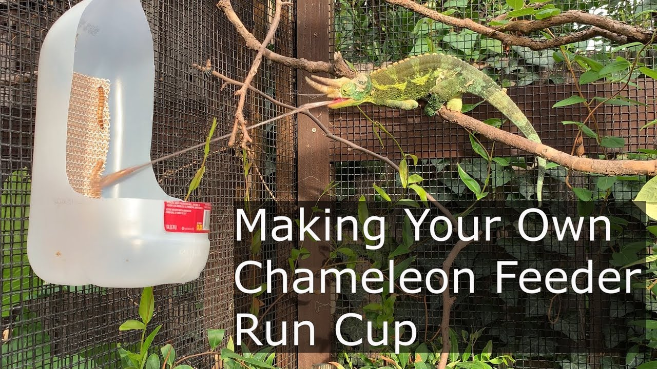 Make a Chameleon Feeder Run Cup