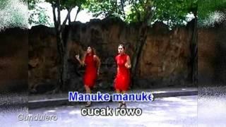 Cucak Rowo - O Hello sister
