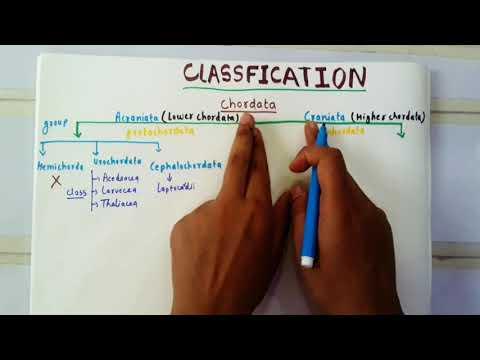 Classification Of Chordata