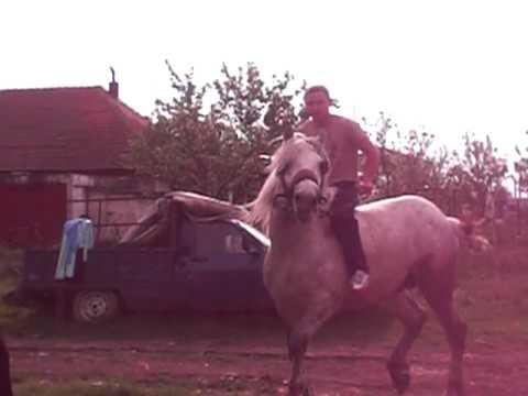 cel mai turbat cal si calaret di izvin (timisoara)