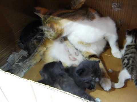 3 Yavru kediyi çöpe atarak ölüme terk ettiler 2