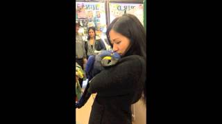 Exotic Hyacinth macaw Max being kissed, cuddled, and massaged