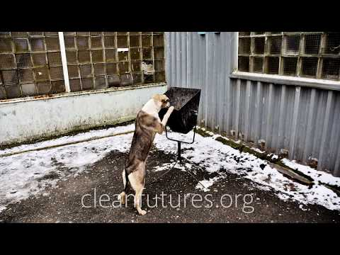 The Dogs of Chernobyl - Abandoned In The Zone