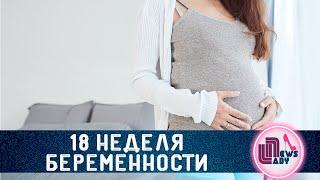 видео 18 неделя беременности