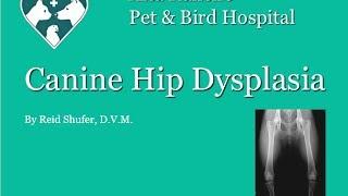 Canine Hip Dysplasia Presentation