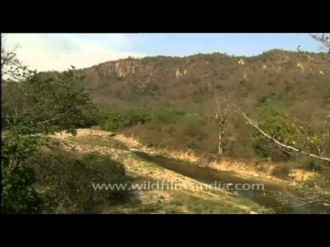 Rural Indian Village