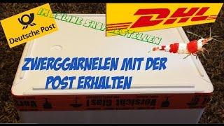 Garnelen Online bestellen & mit der Post erhalten | Zwerggarnelen Unboxing - auspacken