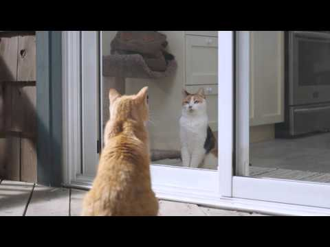 'Cats' Commercial - Koodo Mobile