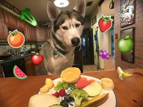 Gohan The Husky Trying Fruits & Vegetables! WILL HE EAT IT?!