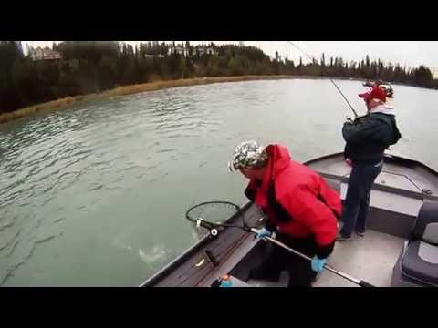 Kenai River Silver Salmon in August! by Robert Scott- Anchor