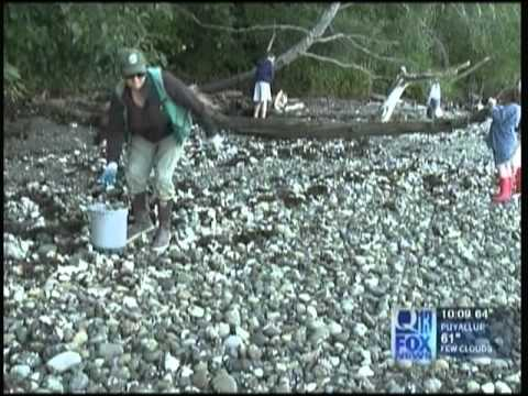 SEABECK OYSTER KILL OFF CLEANUP