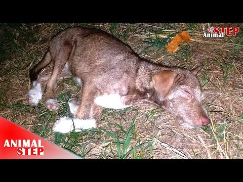 Sick Stray Dog Who Gives Up His Life Finally Waiting for New Home