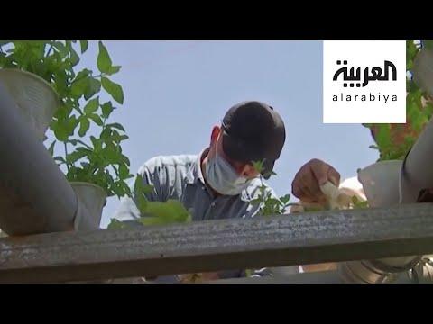 اللاجئون السوريون يزرعون مخيم الزعتري بدعم أممي  - 15:56-2020 / 8 / 4