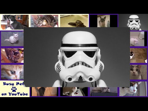 Cats Meowing / Singing IMPERIAL MARCH (Darth Vader's Theme) in Star Wars (Acapella)