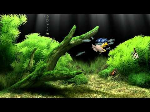 Аквариум (фрагмент видео-заставки)