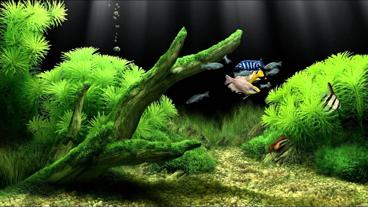 Скачать программу аквариум для телевизора бесплатно