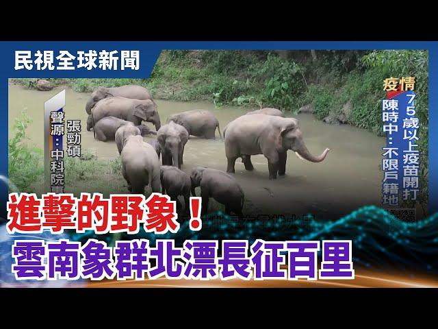 【民視全球新聞】進擊的野象! 雲南象群北漂長征百里 2021.06.13