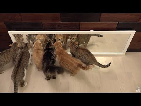 Cats in Mirrors Hilarious Reactions 猫たちと鏡のおもしろい反応