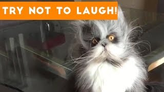 Try Not To Laugh At This Cute and Funny Pet Compilation | Funny Pet Videos