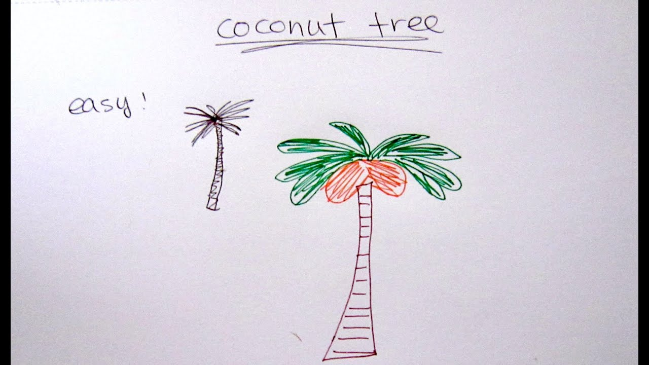 How to Draw Coconut Tree - Easy Drawing Tutorial For Beginners