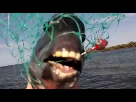 Weird Fish With Human Teeth 4