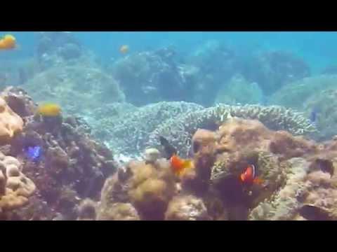 色とりどりの魚が舞う慶良間の海の中