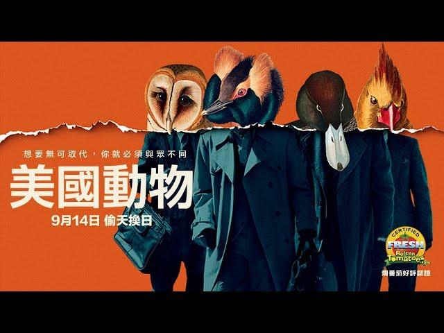 9/14【美國動物】英國奧斯卡新導演最新「8+9犯罪電影」!爛番茄觀眾票選86%高分推薦!